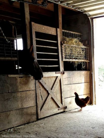 Convert a Horse Stall to a Chicken Coop - Photo by Brittany May/Happy Days Farm (HobbyFarms.com) #coop #chickens #chickencoop