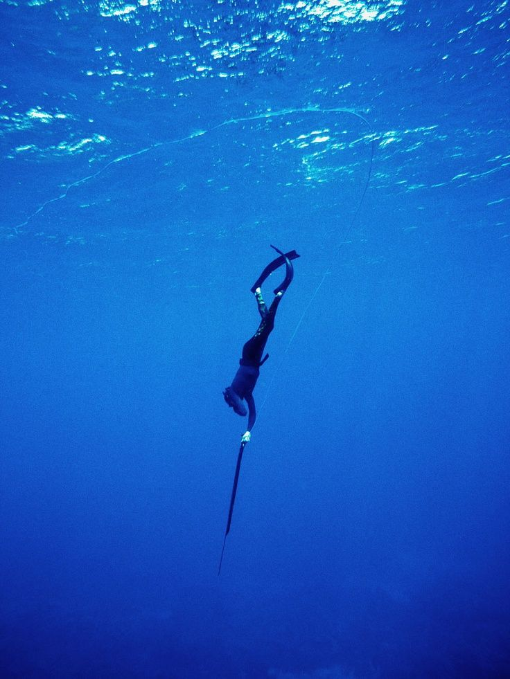 spearfishing Which spearfishing speargun is right for you selection of a speargun should be based on the type of fish you are going to hunt and local spearfishing regulations.