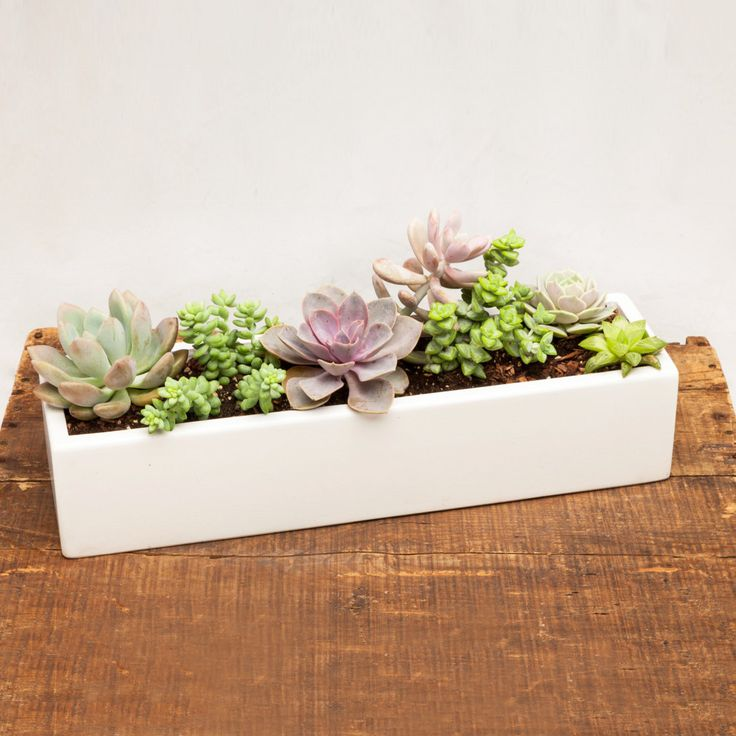 Low rectangle concrete planter in white 18 - Rectangular succulent planter ...
