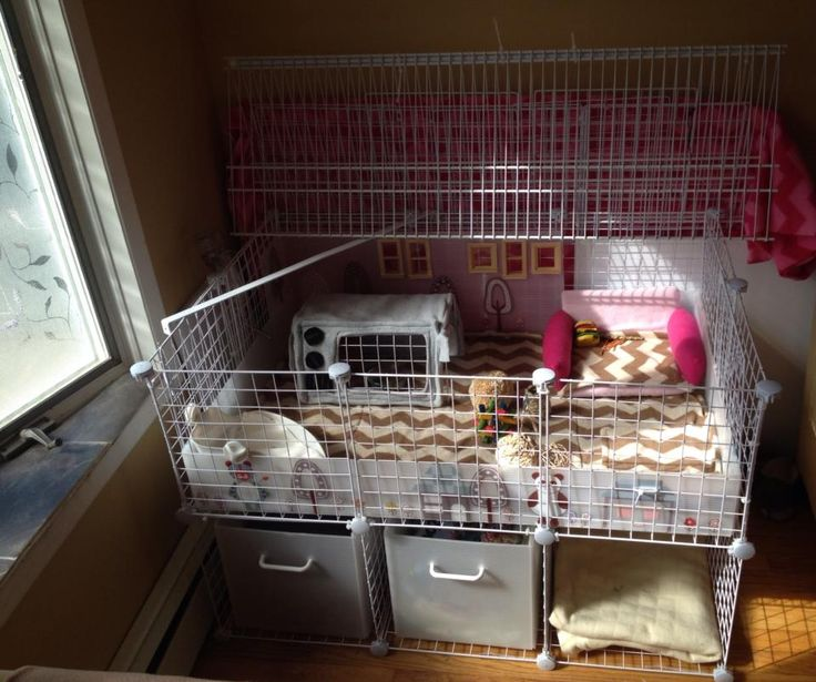 Pinterest discover and save creative ideas for Plastic bin guinea pig cage