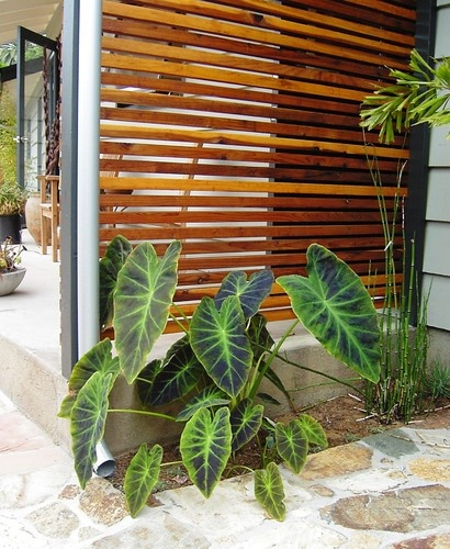 Wood screen wall for the garden outdoorsy pinterest for Screening walls for gardens