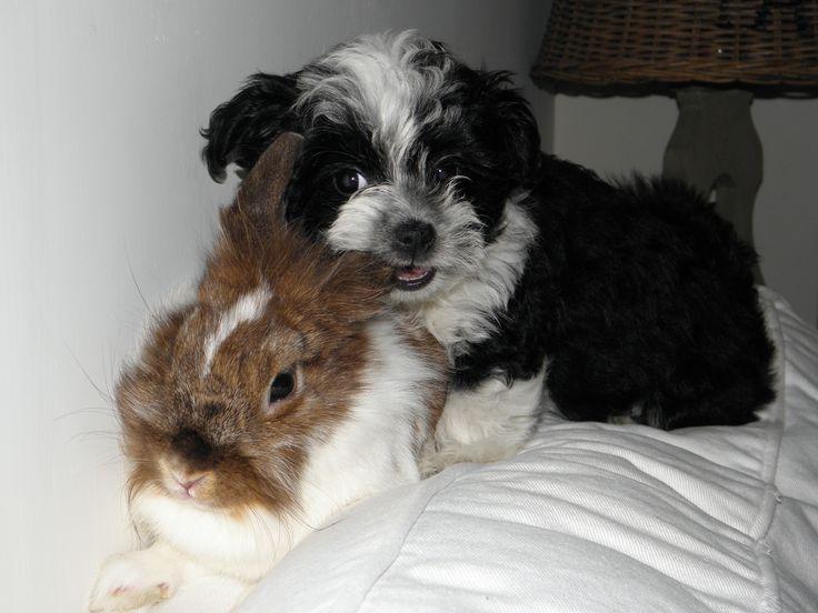 Pip (10 weeks) & Muffin
