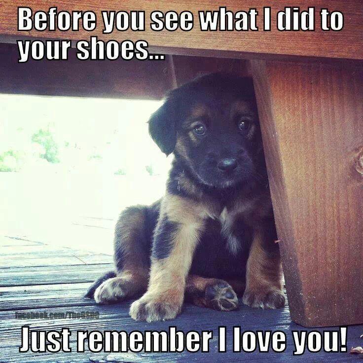 Remember i love you   Cute animal sayings   Pinterest