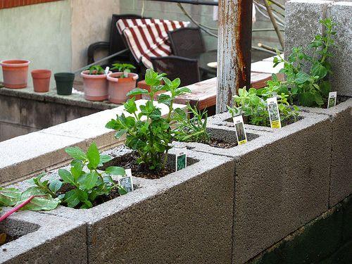 Herb Cinder Block Garden Gardening Pinterest