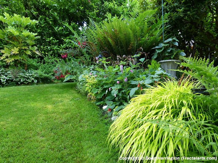 Landscape Borders Plants : Light shade border plants in my garden back patio