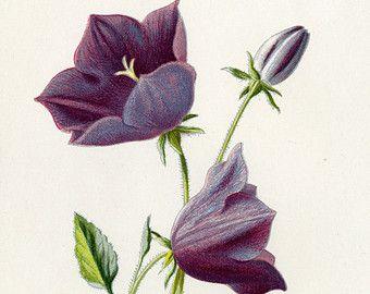 July Birth Flower Larkspur  Inkspiration Pinterest
