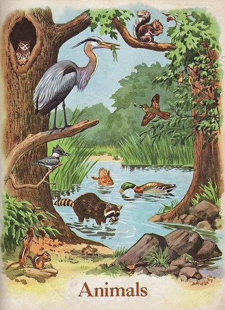 animal scene related keywords - photo #2