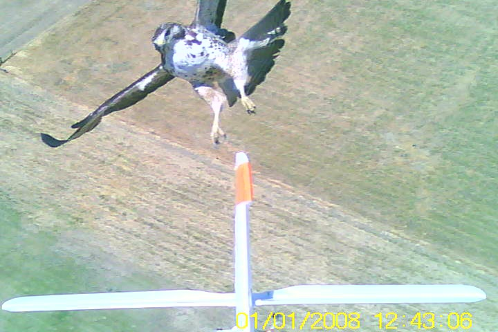 a video still from the backside of a glider plane - hawk in tow