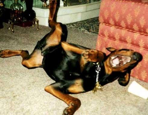Rolling on floor laughing animal fun pinterest for Rolling on the floor laughing