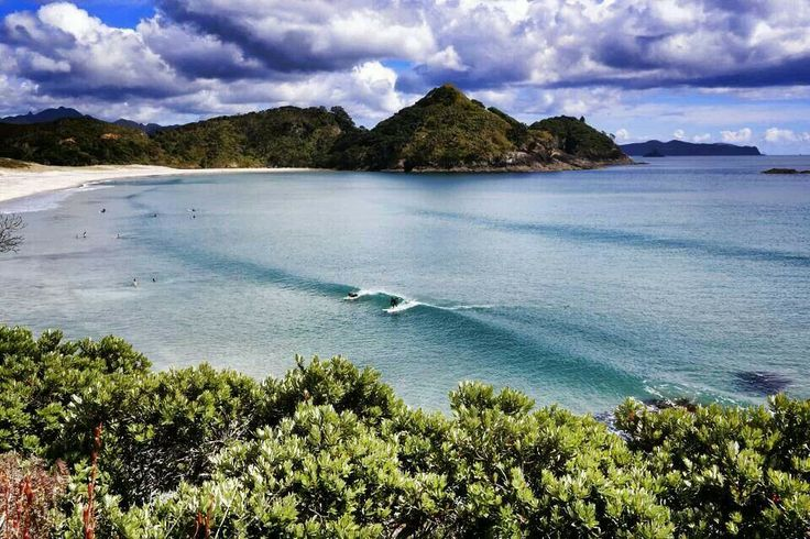 Great Barrier Island New Zealand  City pictures : Great Barrier Island, New Zealand | Oh the places you'll go... | Pint ...