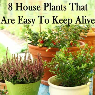 pin by plant care today on houseplants pinterest