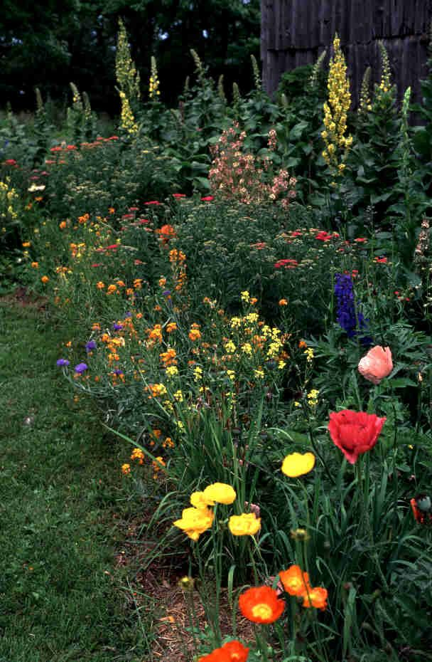 Small cottage garden designs green growing pinterest for Cottage garden designs