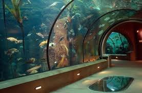 Newport Aquarium Cincinnati Ohio Cincinnati Ohio