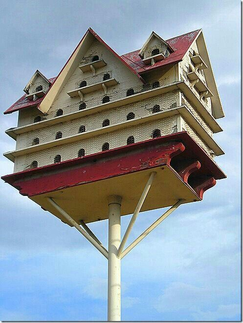 125960120803034447 on Build Bird Houses Plans