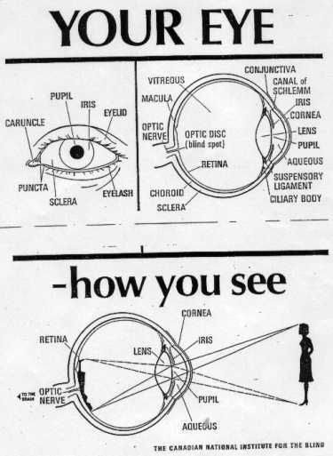diagram of eye