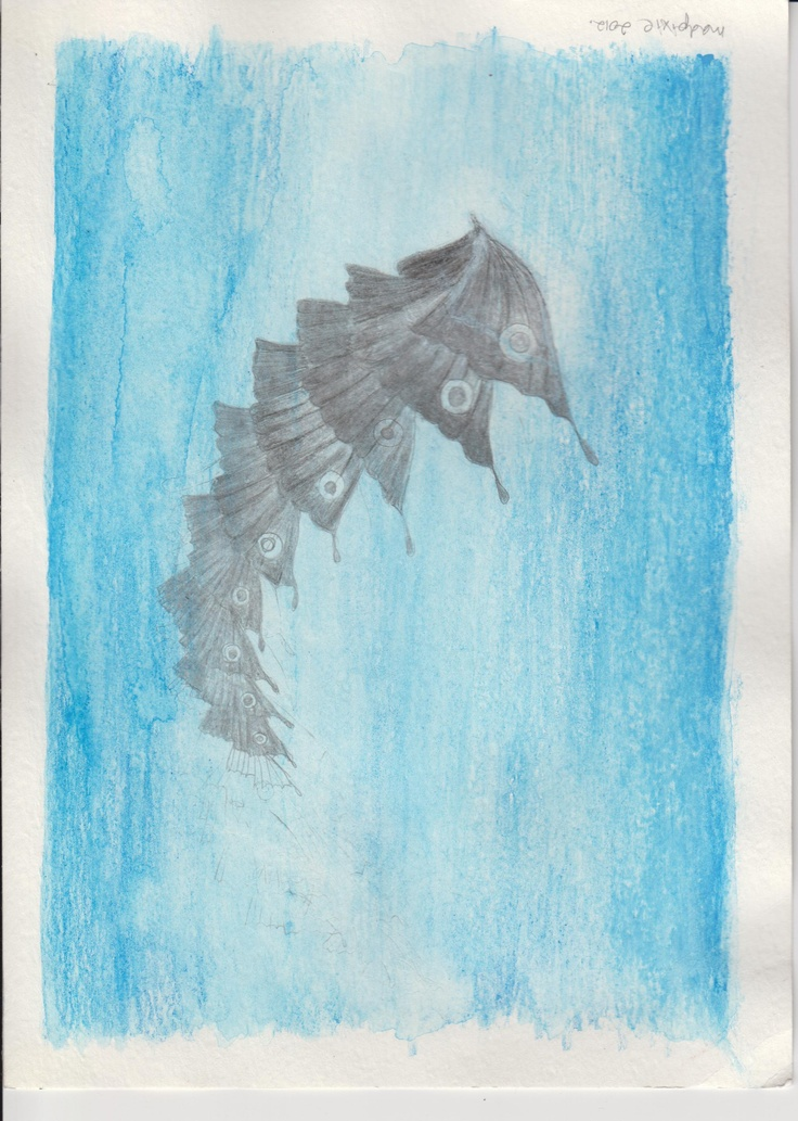 Flutter by | Drawing conclusions | Pinterest