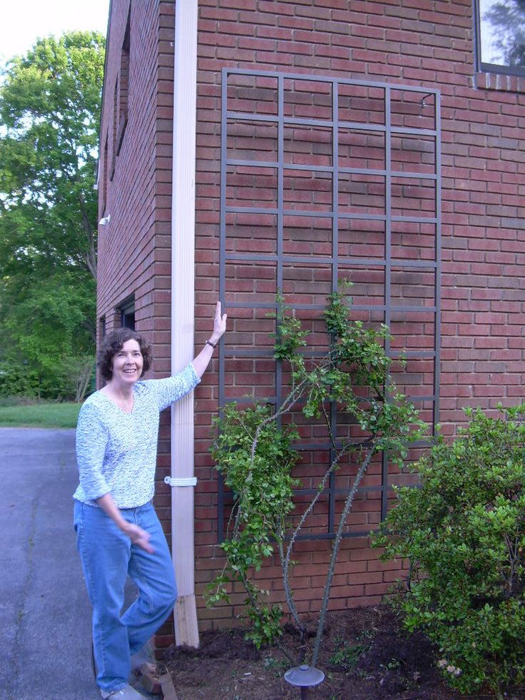 Wall Trellis Designs images