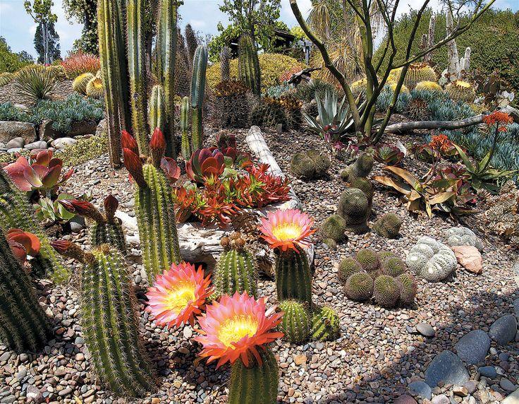 another cactus rock garden yard design and ideas pinterest