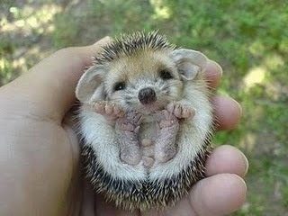 Look at the tiny little feet!