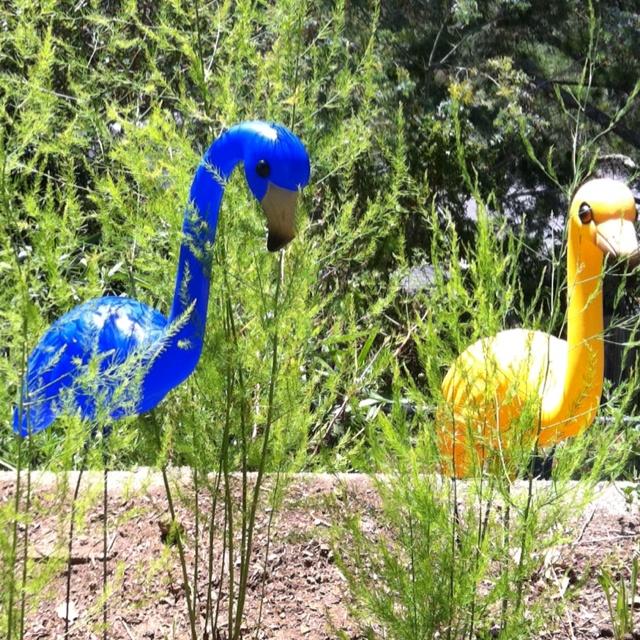 Flamingos guarding the asparagus   Urban Farming   Pinterest