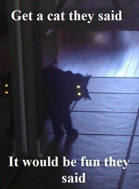 Ew black cats.
