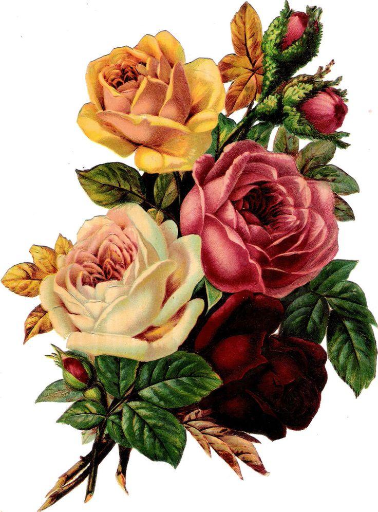 Glanzbilder -Plaatjes : Rose - rose  Victorian Die Cut - Victorian Scrap - Tube Victorienne - Glansbilleder -