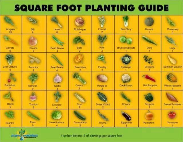 Square foot gardening plan demonstration garden pinterest for Square foot garden designs