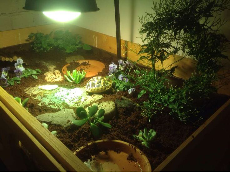 how to build a tortoise enclosure indoor