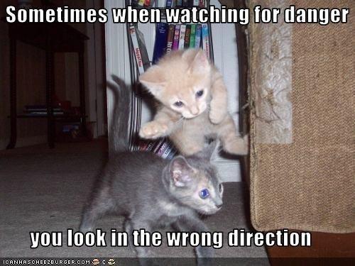 Funny animal memes pinterest - photo#21