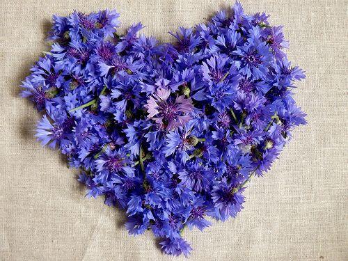 blue daisy heart
