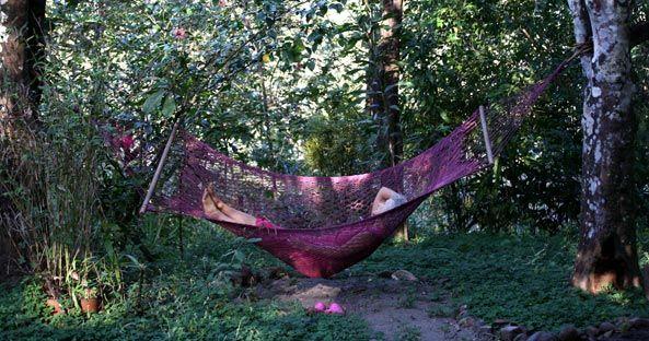 aubergine hammock