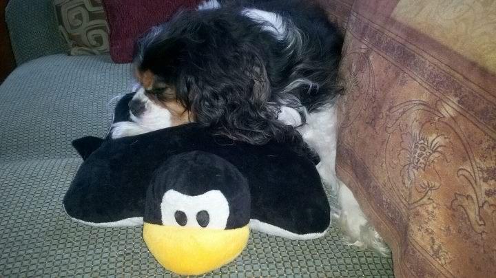 Bradshaw taking a nap on his Pittsburgh Penguin pillow pet. Let's Go ...
