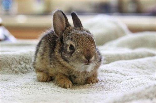 wild baby bunny... | Bunnies | Pinterest