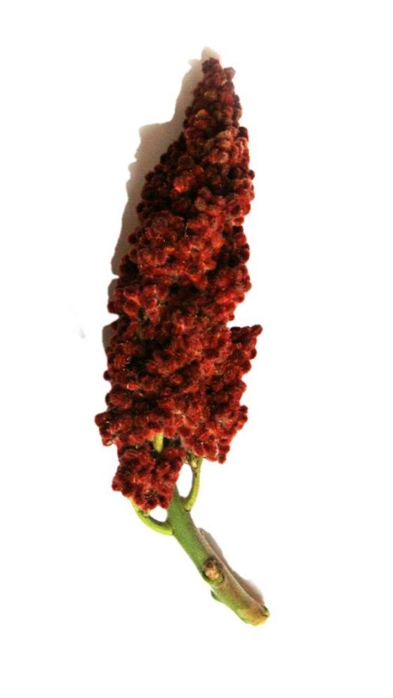 Gastronomics] Sumac: Finding, Foraging, Cooking and Keeping   The ...