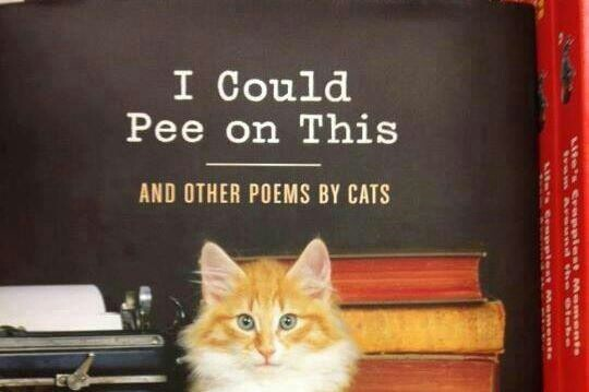 Poems by Cats   * Very FuNNy *   Pinterest