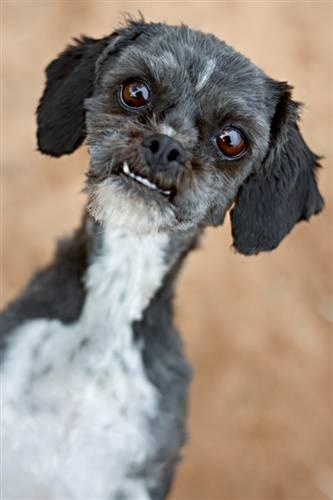 Adopt Gremlin at Best Friends Animal Sanctuary