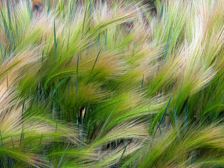 is beautiful grasses - photo #27