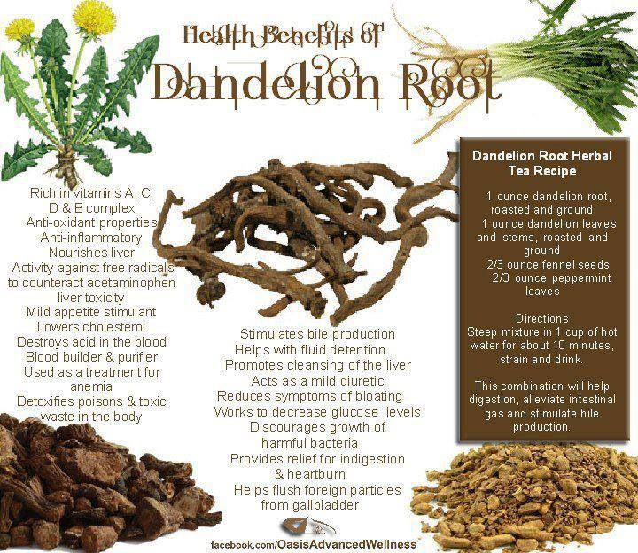 Dandelion Root | Food, Drinks, and Recipes | Pinterest