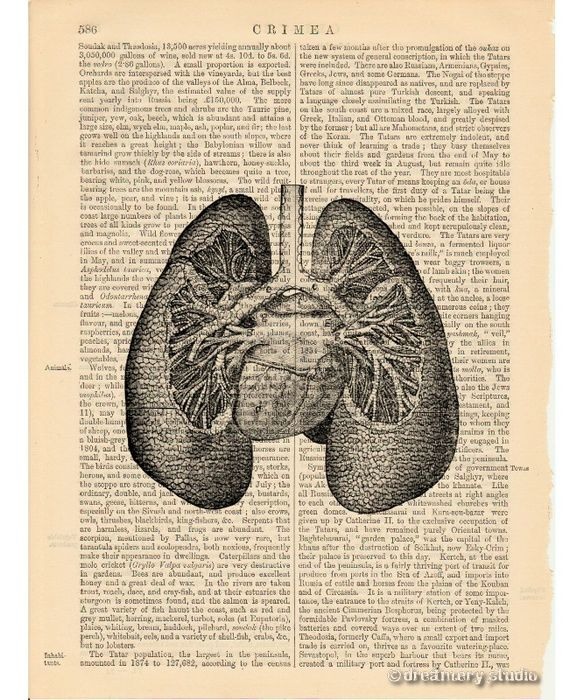 Vintage Heart Medical Illustration Crazywidowfo