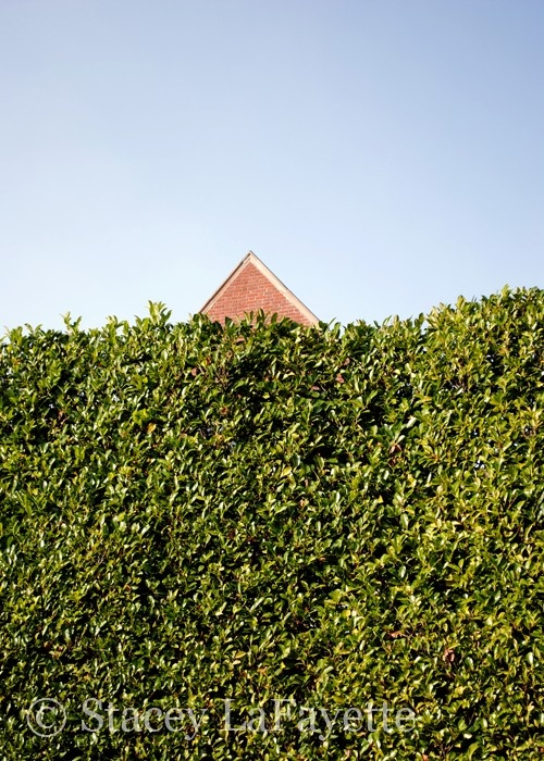 A Tall Hedge Garden Planes Pinterest