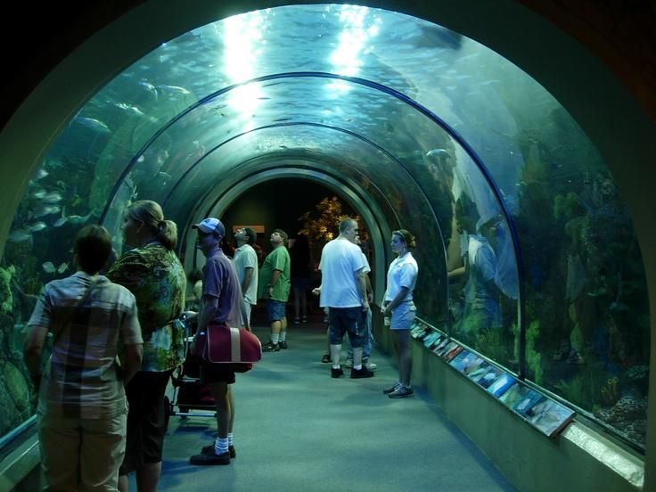 Audubon Aquarium Of The Americas New Orleans Or Bust