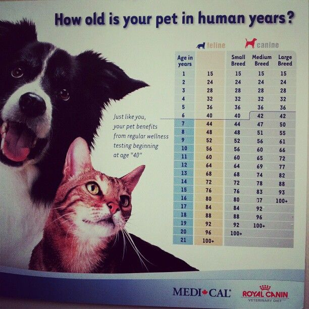 8 cat years equal to human years