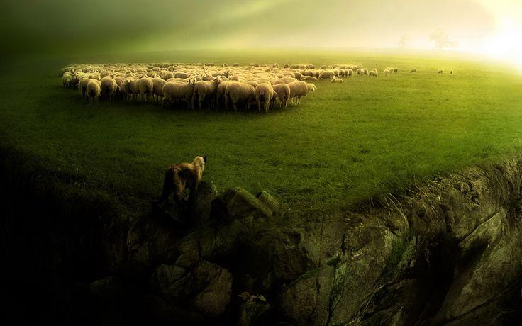 sheepdog guarding well | Lambies | Pinterest