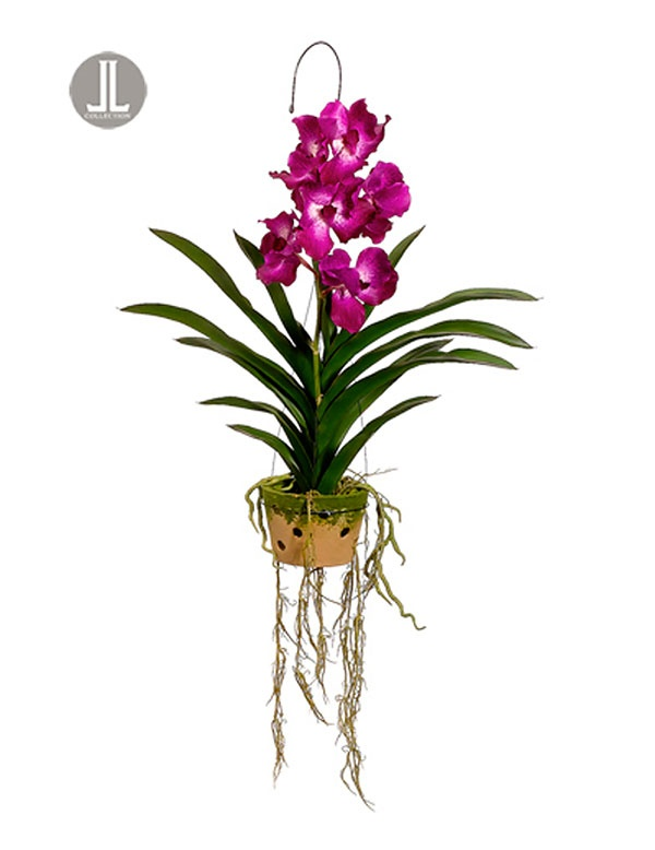 Pin By Cassi Murakami On Garden Orchids Pinterest