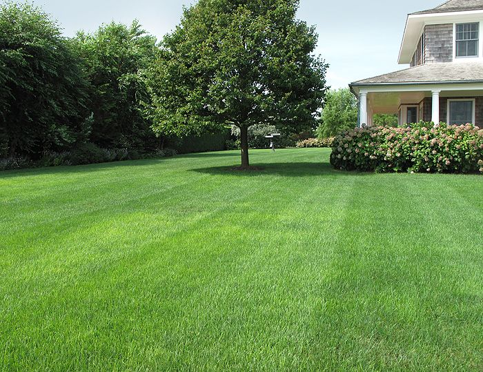Perfect Backyard Garden : backyard gardens