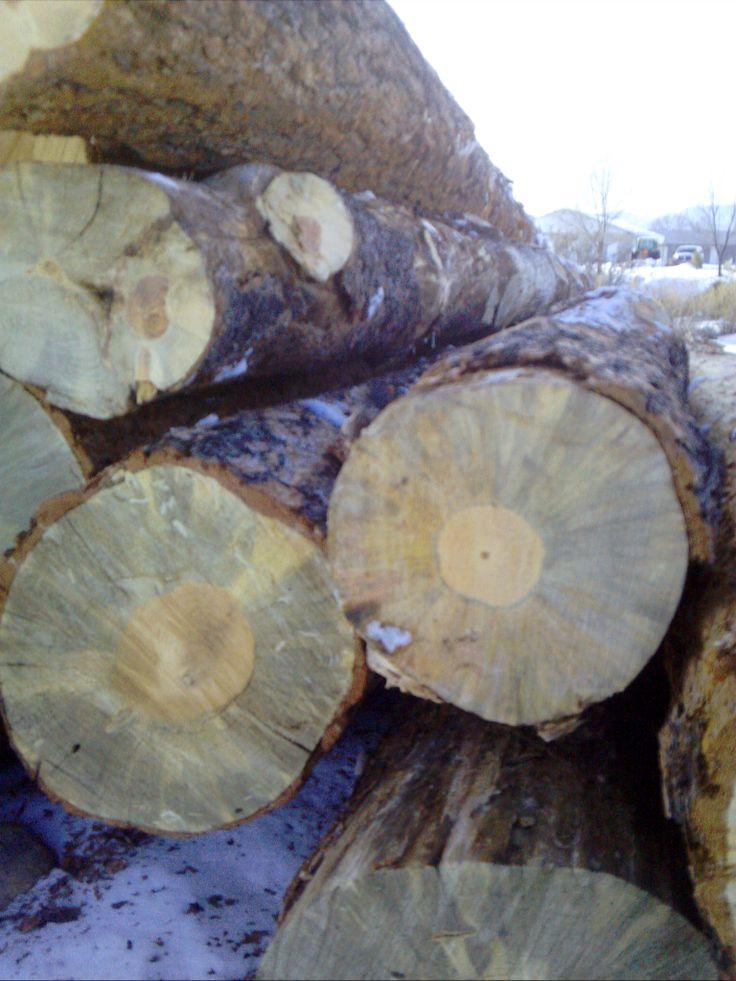 Beetle kill lumber