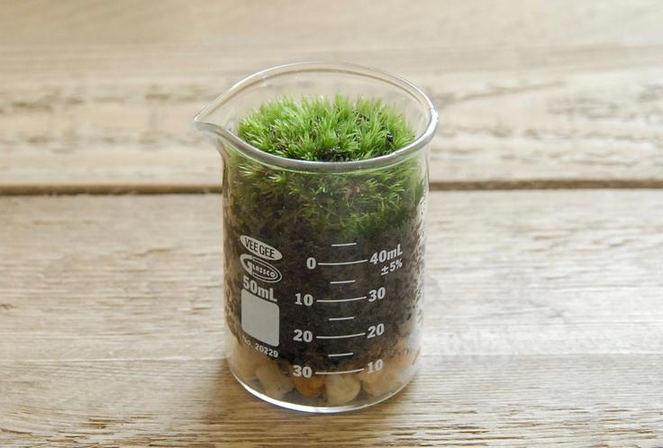 Mini Terrarium Beaker - Science Gift, Home Decor, Office Decor, Spring ...