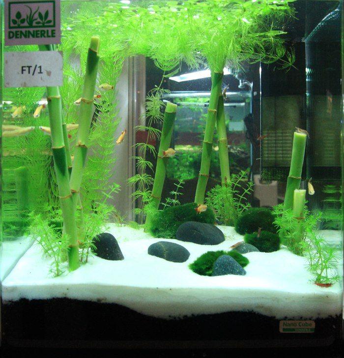 Found on aquascapingworld.com