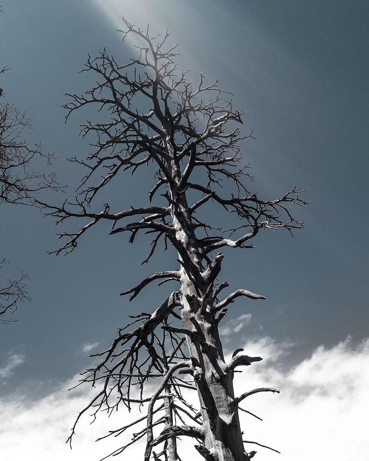 Обнажили Деревья
