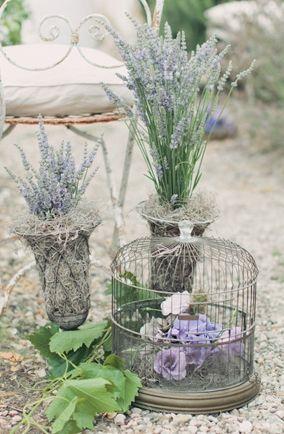 lavender /lavanda / lavander